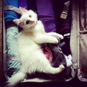 Travel with your cat to the best timeshare resorts