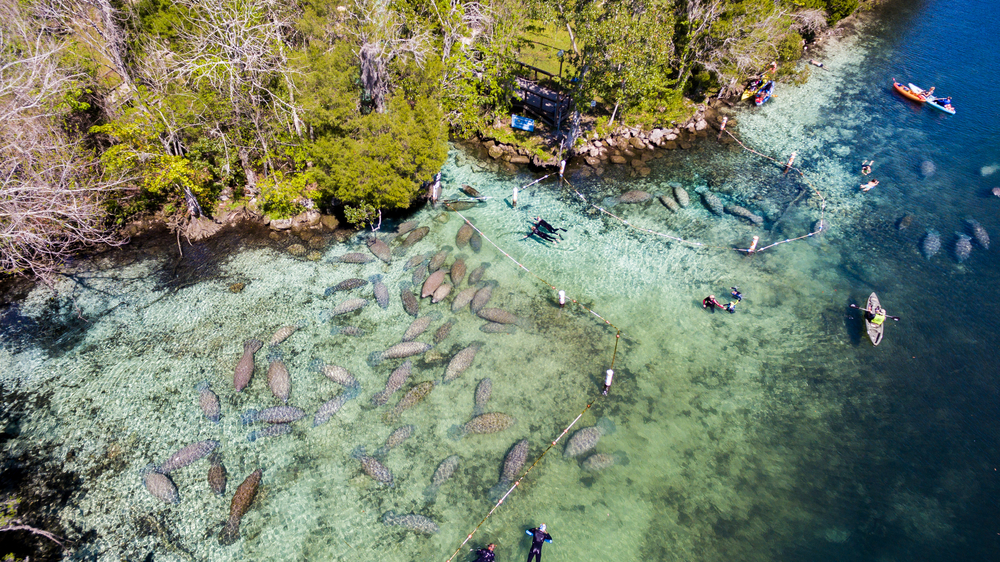 Wildlife Day Trips From Orlando