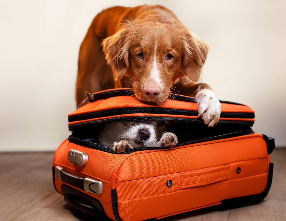Family vacations with pets