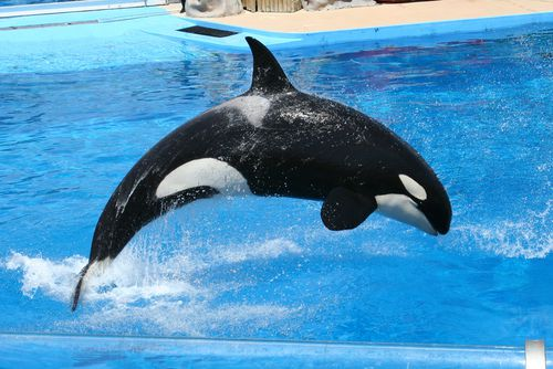 seaworld best theme parks in the world