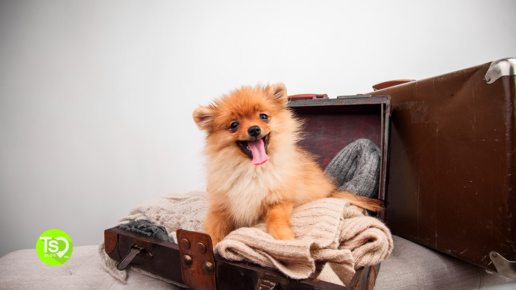 Pet in Suitcase on Vacation