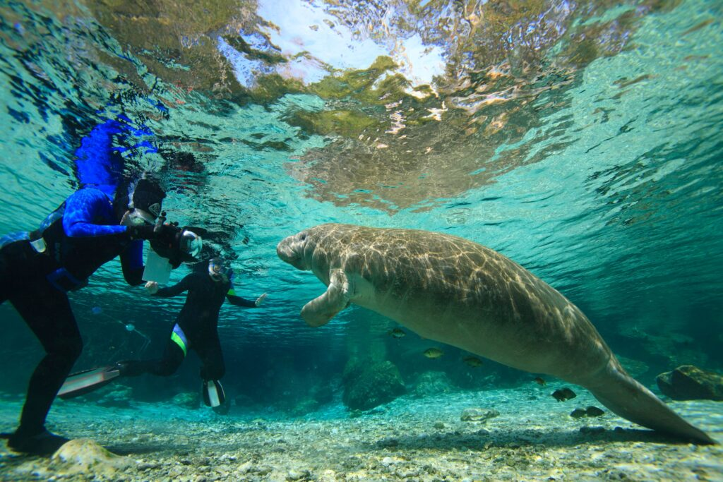 day trips from orlando crystal river